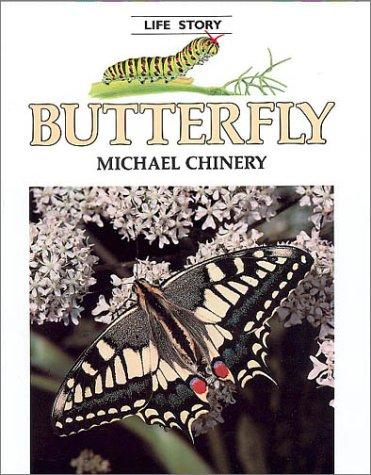 Butterfly by Michael Chinery